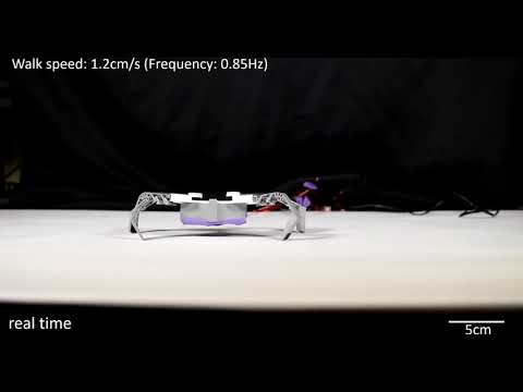 Thanks to 'flexoskeletons,' these insect-inspired robots are faster and cheaper to make
