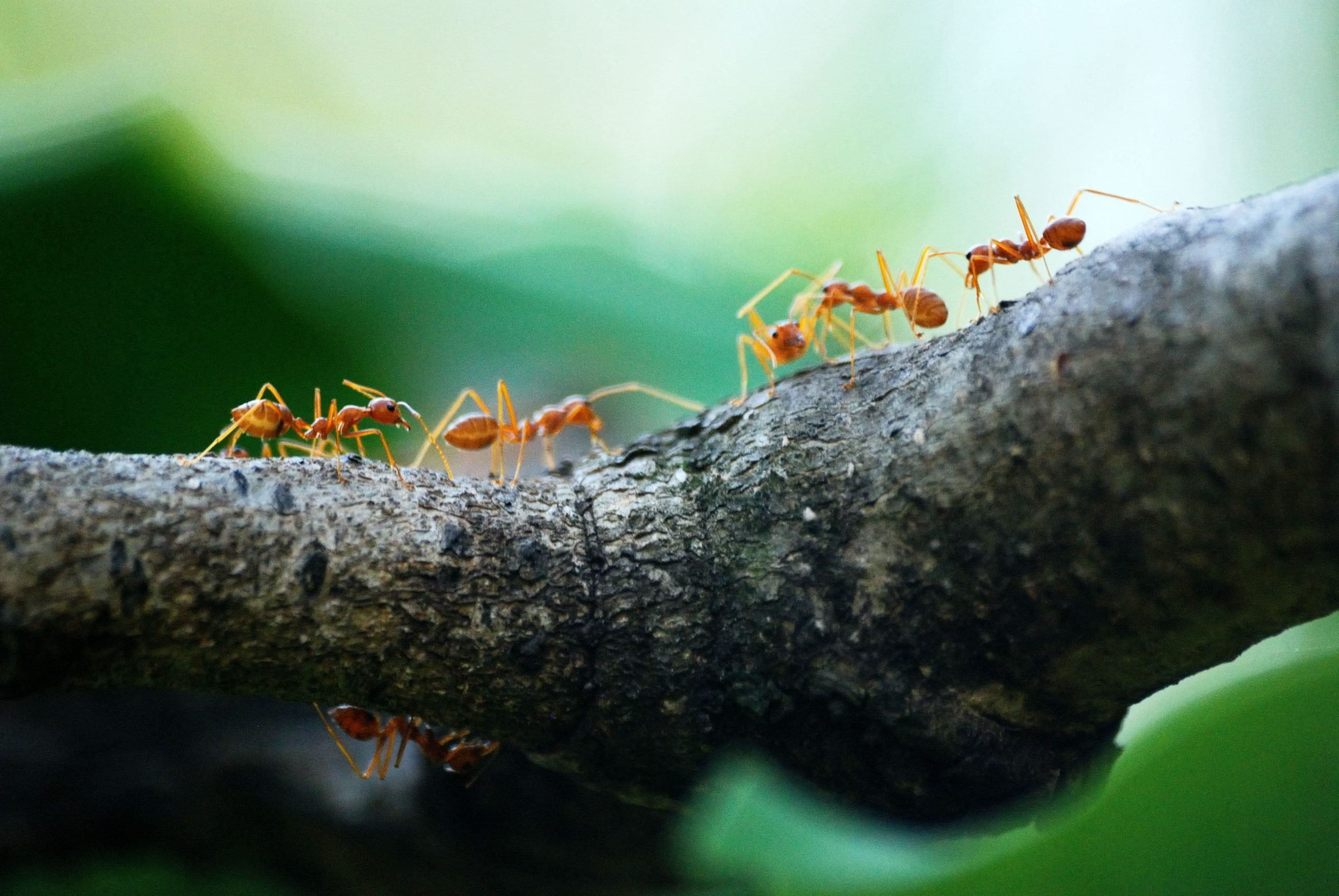 Robot Ants and Swarm Intelligence