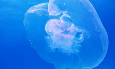 Moon Jellyfish and Neural Networks