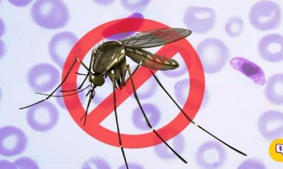 Artificial Intelligence Used to Fight Against Mosquitoes
