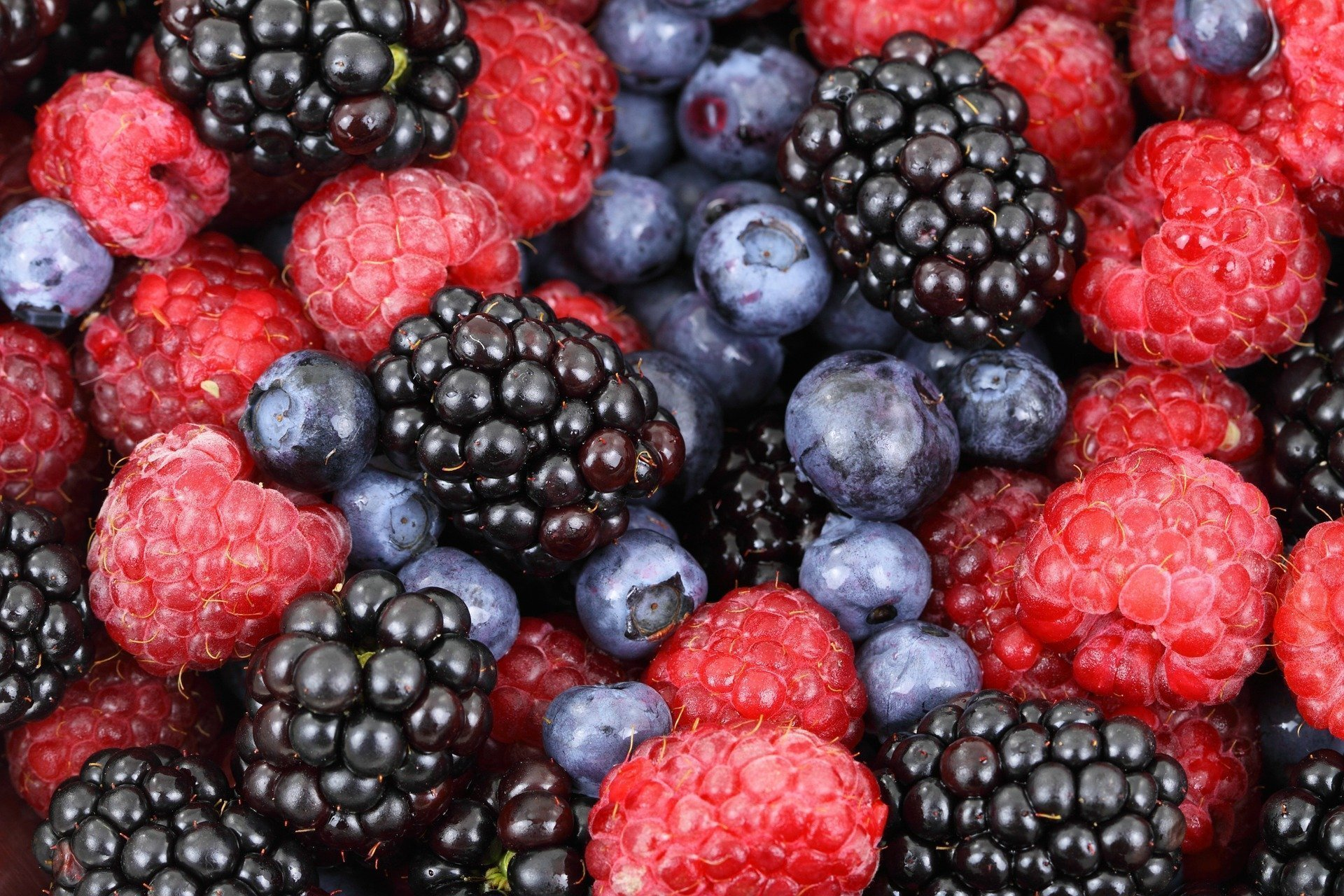 """AI """"Maths Robot"""" Helps Manage Microclimates and Increase Berry Yield Predictions"""