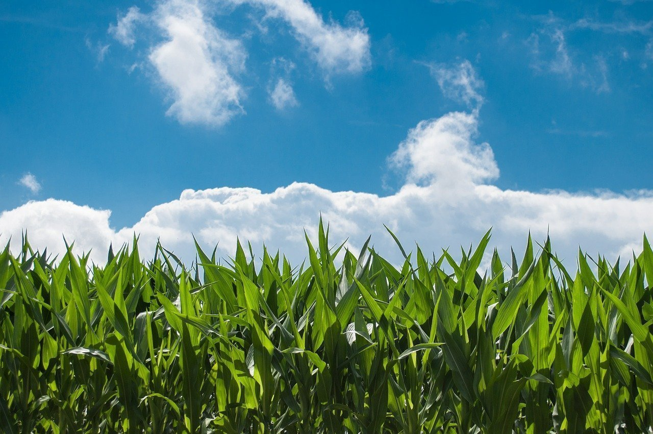 Artificial Intelligence Algorithm Used to Predict Agriculture Yield