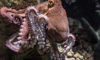 Researchers Develop Octopus-Inspired Soft Robotic Arm