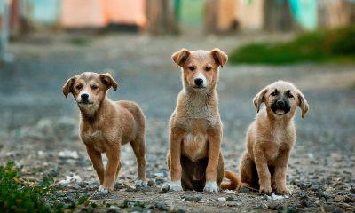Startups Creating AI App To Alert Pet Owner To Abnormal Behaviors