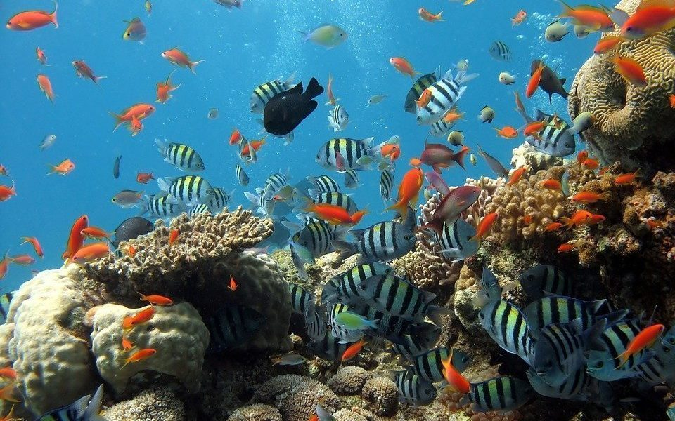 AI Used to Monitor Health of Coral Reefs and Detect Ocean Trash Pollution